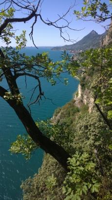 Monte Castello di Gaino e la piana di Toscolano visti attraverso i rami