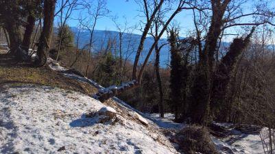 monte Baldo dietro alle fronde