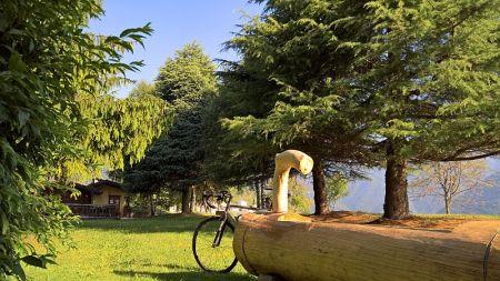 Fontana intagliata nel tronco