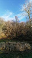 Monte Tesio, bosco e doline