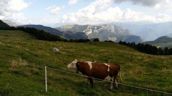 Alpeggi di Pra Alpesina