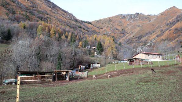 Cervi e monte Lividino