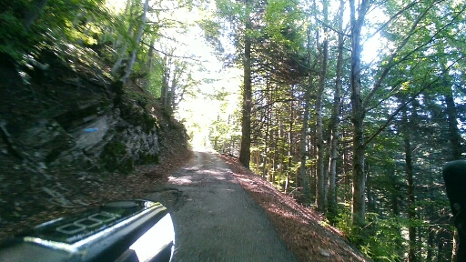 Foresta a Malga Alpo