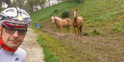 Cavalli al Forcellino